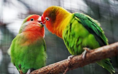 Parrot Care Advice