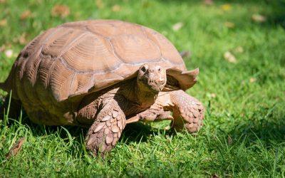 Tortoise Law